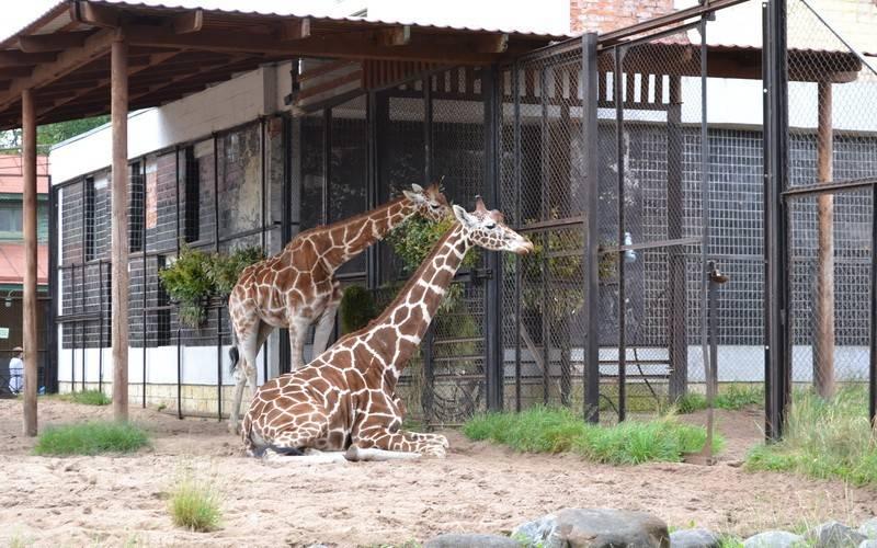 Ленинградский зоопарк (фото).